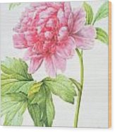 Japanese Tree Peony Wood Print by Pierre Joseph Redoute