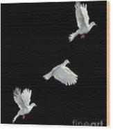 Java Dove In Flight Wood Print by Stephen Dalton
