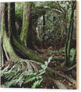 Jungle Trunks3 Wood Print by Les Cunliffe