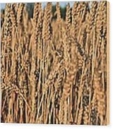 Just Wheat  Wood Print by JC Findley