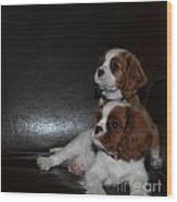 King Charles Puppies Wood Print by Dale Powell