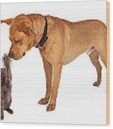 Kitten Batting At Nose Of Large Breed Dog Wood Print by Susan Schmitz
