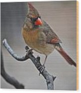 Lady Cardinal Wood Print by Skip Willits