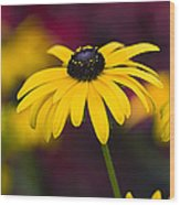 Late Summer Rudbeckia  Wood Print by Tim Gainey