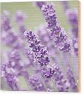 Lavender Dreams Wood Print by Kim Hojnacki