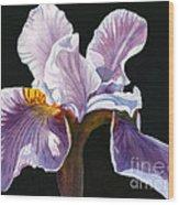 Lavender Iris On Black Wood Print by Sharon Freeman