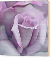Lavender Rose Flower Portrait Wood Print by Jennie Marie Schell