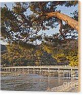 Leaning Pine Tree Arashiyama Kyoto Japan Wood Print by Colin and Linda McKie