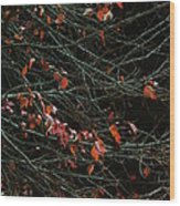 Leaves By Night Wood Print by Guy Ricketts