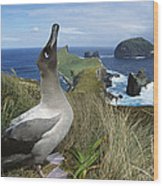 Light-mantled Albatross Sky-pointing Wood Print by Tui De Roy