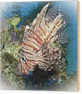 Lion Fish 2 Wood Print by TN Fairey