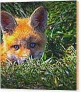 Little Red Fox Wood Print by Bob Orsillo