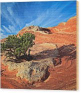 Lone Juniper Wood Print by Inge Johnsson