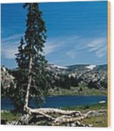 Lone Tree At Pass Wood Print by Kathy McClure