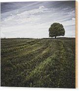 Lone Tree  Wood Print by John Farnan