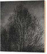 Lost In Moments Wood Print by Taylan Apukovska