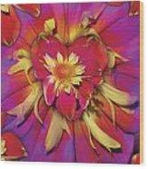 Loveflower Orangered Wood Print by Alixandra Mullins