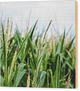 Maize On The Field Wood Print by Frank Gaertner