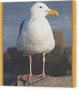 Make Sure You Get My Good Side Poster Wood Print by Barbara Snyder