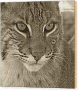 Male Bobcat - Sepia Wood Print by Jennifer  King