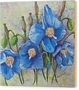 Meconopsis    Himalayan Blue Poppy Wood Print by Karin  Dawn Kelshall- Best