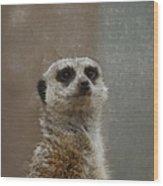 Meerkat 5 Wood Print by Ernie Echols