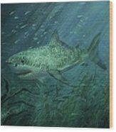 Megadolon Shark Wood Print by Tom Shropshire