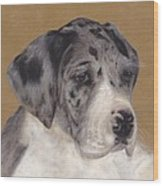 Merle Great Dane Puppy Wood Print by Loreen Pantaleone