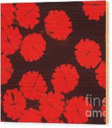 Micrasterias Wood Print by P. Dayanandan