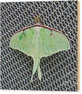 Mint Green Luna Moth Wood Print by Andee Design