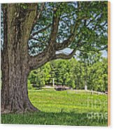 Minute Man National Historical Park  Wood Print by Edward Fielding