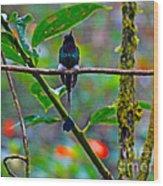 Mister Santa Pants II   Mindo Hummingbird Wood Print by Al Bourassa