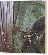Misty Woods Wood Print by Thomas R Fletcher