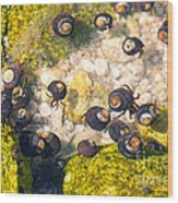 Monterey Bay Tide Pools Wood Print by Artist and Photographer Laura Wrede
