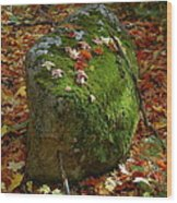 Mossy Rock Wood Print by Sandra Updyke