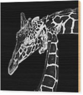 Mother And Baby Giraffe Wood Print by Adam Romanowicz