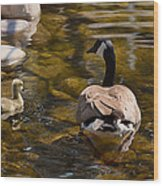 Mother Goose Il Wood Print by Maria Angelica Maira