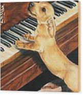 Mozart's Apprentice Wood Print by Barbara Keith