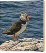 Mr. Puffin Wood Print by Michael Pickett