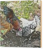 Mr. Rooster And All The Chickens Scratching For A Snack Wood Print by Artist and Photographer Laura Wrede