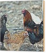 Mr. Rooster Talking With The Chickens Wood Print by Artist and Photographer Laura Wrede