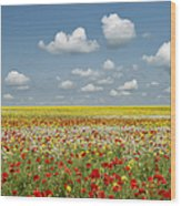 Multicoloured Field Wood Print by Tim Gainey