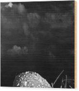 Mushroom Wood Print by Bob Orsillo