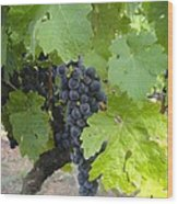 Napa Valley Vineyard Grapes Wood Print by Jennifer Lamanca Kaufman