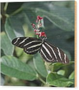 National Zoo - Butterfly - 12121 Wood Print by DC Photographer
