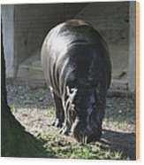 National Zoo - Hippopotamus - 12121 Wood Print by DC Photographer