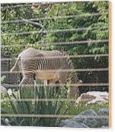 National Zoo - Zebra - 12121 Wood Print by DC Photographer