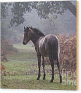 New Forest Pony Wood Print by Dave Pressland FLPA