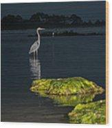 Night Stalker Wood Print by Volker blu Firnkes