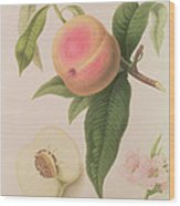 Noblesse Peach Wood Print by William Hooker